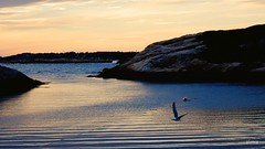 Sunset in the Cove (photo fiddler) Tags: sunset gull may peggyscove 2016