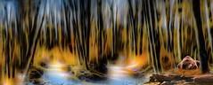 Un rve d'ours (Didier HEROUX) Tags: tree animal photoshop alpes flickr raw rando cc animaux 74 arbre fort ours balade hautesavoie retouche faune rve sallanches posttraitement didierheroux herouxdidier