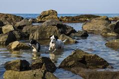 Cani a pesca (masy.lombardo) Tags: mare paesaggi calabria animali ambiente panorami allaperto