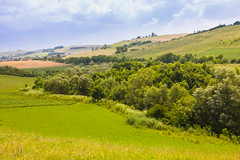 A thicket (Raoul Pop) Tags: trees summer season countryside hills valley romania crops ro transilvania rollinghills tarnaveni
