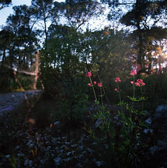 Soul Healing (Mikah_Manansala) Tags: color 120 film nature forest spring kodak ishootfilm hasselblad medium format analogue ektar ilovefilm filmforever
