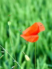 Schlupfwespen_tx_DSC_1025 (said.bustany) Tags: public juni tiere hessen wiese insekten 2016 büdingen schlupfwespe