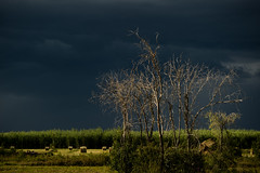 Summer Storm; Cecil Lake, BC (erik-peterson) Tags: light summer storm clouds bc britishcolumbia darkclouds 2015 summerstorm erikpeterson cecillake d3s