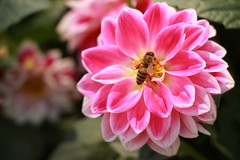 IMG_4431 (ercan_fb) Tags: park canon spring istanbul bee bahar iek 18135 600d emirgankorusu