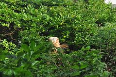 Propensity For Density (eddi_monsoon) Tags: threesixtyfive 365 selfportrait selfie self portrait garden leaves