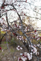springtime blooming (NatalieShockleePhotography) Tags: color colors spring bright springtime
