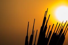 Last days (Ben De La Rosa) Tags: sunset sun newjersey shapes specular hackensack goldenlight nikond3300