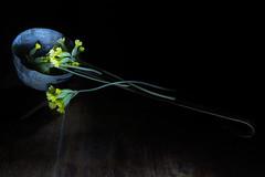 Mestolo e primule (Vanda Guazzora) Tags: lightpainting italia primule luce notturno mestolo