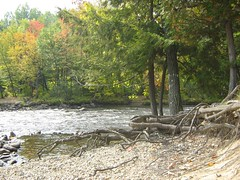 22 Septembre 2007 - 35 - Racines (Patrick Limoges) Tags: waterfall quebec
