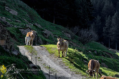 Andorra rural: Encamp, Vall d'Orient, Andorra (lutzmeyer) Tags: pictures primavera rural sunrise photography spring europe photos pics may images mai schild fotos mayo sonnenaufgang andorra bilder imagen pyrenees springtime iberia frhling pirineos pirineus iberianpeninsula pyrenen maig imatges frhjahr encamp iberischehalbinsel sortidadelsol elscortals canoneos5dmarkiii encampparroquia lutzmeyer lutzlutzmeyercom rutaciclista03elscortals