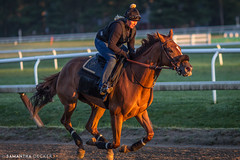 Counting Down to the Track (Samantha Decker) Tags: horse ny newyork sunrise upstate saratogasprings nyra canonef135mmf2lusm oklahomatrack canoneos60d samanthadecker