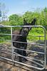 Hey There! (Katie_Russell) Tags: ireland donkey northernireland ni ulster nireland norniron coleraine countylondonderry countyderry coderry colondonderry colderry loughan countylderry