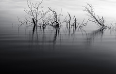 Sticks (Mat Viv) Tags: longexposure summer blackandwhite italy white lake black water monochrome silhouette canon reflections outdoors evening sticks waves sigma naturallight lucca depthoffield tuscany bnw sigmalens massaciuccoli 700d canon700d canoneos700d t5i sigma1750mmf28 canont5i canoneost5i