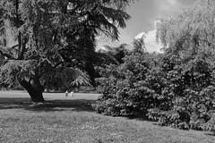 Entspannen /Relax (vb-bildermacher) Tags: park bw relax urlaub nrw sonne baum freizeit schwarz rentner entspannen weis ruhe rente erholen lebensabend