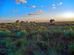 Abandoned barn and house at sunset with prairie primrose in the foreground (Tom Herlyck) Tags: colorado sunset pueblocounty prairie shortgrassprairie primrose sky southeastcolorado southeasterncolorado spring abandoned clouds sagebrush blue beautiful decaying highplains light may goldenlight