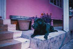 Goofy. (The Daniel Garca) Tags: film lomo lomography purple phototgraphy lomochrome