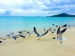Let the sea set you free  #antigua #antiguaandbarbuda #caribbean #beach #island #paradise #seagulls #nofilter  (ingridub1) Tags: seagulls beach island paradise antigua caribbean nofilter antiguaandbarbuda