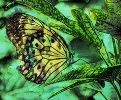 Butterfly Fantasy #1 (FotoGrazio) Tags: blackandwhite painterly macro art texture nature closeup composition contrast butterfly insect botanical photography wings flickr photoshoot highcontrast explore moment photographicart capture mothernature digitalphotography phototopainting phototoart 500px freeimage freepicture sandiegophotographer artofphotography downloadforfree flickrelite californiaphotographer freetodownload internationalphotographers worldphotographer photographersinsandiego fotograzio photographersincalifornia waynegrazio waynesgrazio
