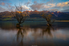 Glenorchy Willow Trees (shaunyoung365) Tags: mountain lake mountains clouds sunrise landscape newzealnd sonya7rii