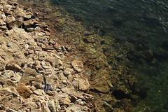 Coast (pedeypie3) Tags: adelaide gardenisland