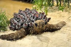 2016-03-07_0877n-mccc (lblanchard) Tags: education turtle critters mercercounty