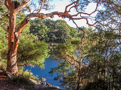 Gogerly's Point! (TonyinAus) Tags: tree history water river australia gumtree porthacking
