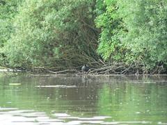 everything in the green range (achatphoenix) Tags: boat sieltief rheiderland eastfrisia ostfriesland boot boating water eau aqua wasser grn vert green midsummer sommeranfang juni june reflection spiegelung