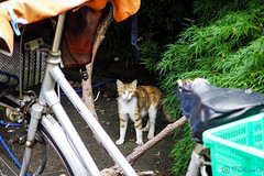 Today's Cat@2016-06-12 (masatsu) Tags: cat pentax catspotting mx1 thebiggestgroupwithonlycats