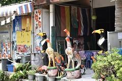 _DSC0708 (lnewman333) Tags: sea thailand island seasia southeastasia rooster kohsamed kosamet cockerel kosamed gulfofthailand