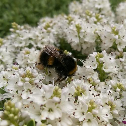 A Bee shot on a Pee.......9