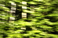 The Wind (Cindy's Here) Tags: trees ontario canada motion blur leaves forest canon air pearl challenge thewind ansh billsoldamethystmine