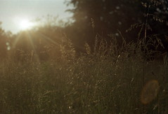 Field of sun shine (suxarik) Tags: light sun color film nature gold diy nikon warm ray dof kodak bokeh rangefinder scanned nikkor expired shining rotary rf s2 selfdeveloped c41 kodakgold200 jobo nikons2 cpe2 minoltadimagescan