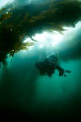 Monterey Fun Dive at McAbee Beach (Graham Gibson) Tags: sony rx100 ii rx100m2 m2 underwater housing dive scuba acquapazza ys01 strobe fix uwl04 ultrawide m67 monterey bay california