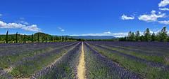 Pays de la lavande (Diegojack) Tags: panorama france vacances nikon perspectives paca provence roussillon joucas lavandes nikonpassion d7200
