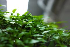 IMG_0174_1 (pavel.milkin) Tags: light green leaves eco helios 442 helios442 helioslens