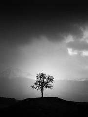 As dusk fell. (davidandsus) Tags: newzealand blackandwhite tree mono otago littlestories picswithsoul