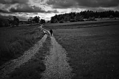 Evening Walk (redy1966) Tags: bw nature monochrome evening walk bnw waldviertel oesterreich 2016
