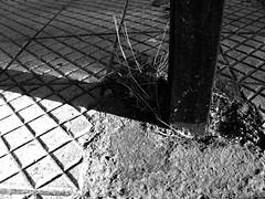 Santiago de Chile (Photos of Santiago de Chile) Tags: chile park old flowers autumn trees santiago winter light sky people blackandwhite streetart fall church latinamerica southamerica nature leaves saint animals architecture kids buildings children temple graffiti doors shadows christ god gates faith religion jesus traditions belief urbanart textures silence believe sacred walls christianity virginmary sanctuary