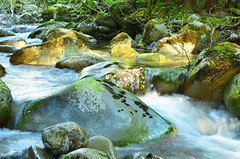 Lynn Creek Tributary (Lynn Canyon Ecology Centre) Tags: lynncanyon lynnvalley
