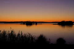 Tuggerah Lake sunset (loobyloo55) Tags: trees sunset water grass silhouette gold golden purple silhouettes australia newsouthwales grasses theentrance tuggerahlakes theentrancenorth