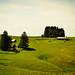 Golf_Pianu_2013_37