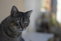 Faro Cats of Faro, Portugal (Jay Jay Kane) Tags: cats portugal cat faro 50mm lowlight sony f18 nex albuferia e50mm farocats nex5 sel50f18