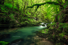 Source de la Loue  (Johann Pourcelot) Tags: bw pixy green nature water forest wonderful gris waterfall nikon eau magic pixie fairy filter bosque polarizer cascade wald fe marvelous franchecomt fort bois fairytales manfrotto fes foresta filtre polarizing pontarlier ndfilter merveilleux loue maravilloso polarisant neutraldensity frique contedefe nd110 hautdoubs ouhans sourcedelaloue nikond800 grisneutre densitneutre afsnikkor1635mmf4gedvr johannpourcelot