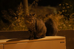 Faro Cats of Faro, Portugal (Jay Jay K) Tags: cats portugal cat faro 50mm lowlight sony f18 nex albuferia e50mm farocats nex5 sel50f18 farocat