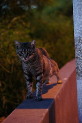 Faro Cats of Faro, Portugal (Jay Jay K) Tags: cats portugal cat faro 50mm lowlight sony f18 nex albuferia e50mm farocats nex5 sel50f18