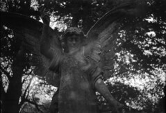 Coronet Angel (Skink74) Tags: uk trees england blackandwhite sculpture 120 film monument cemetery grave statue angel wings memorial hampshire lightleak 6x9 rodinal coronet bellows ilford folding hursley fp4plus standdevelopment filmdev:recipe=5389 coronetanastigmat100mm163
