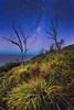 Milky Way (stevoarnold) Tags: sky tree stars hill sydney australia nsw milkyway garie royalnationalpark gariebeach rnp