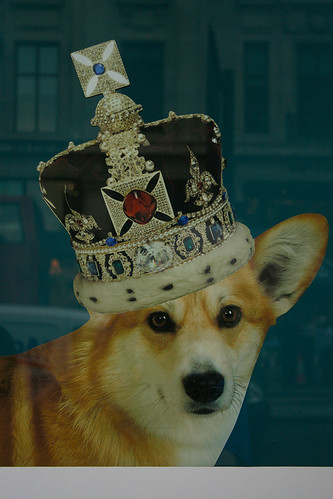 Crowned Corgi