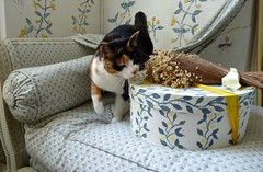 Miniputz mag Antiquitten (stanzebla) Tags: cats katzen