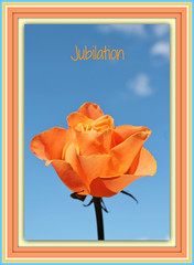 Joy & Jubilation (bigbrowneyez) Tags: blue sky orange love nature beautiful rose happy petals pretty bright sweet gorgeous joy rosa natura fresh special precious bella colourful lovely cheerful delicate sherbet amore jubilation bellissima moltobella flickrjoyful joyjubilation